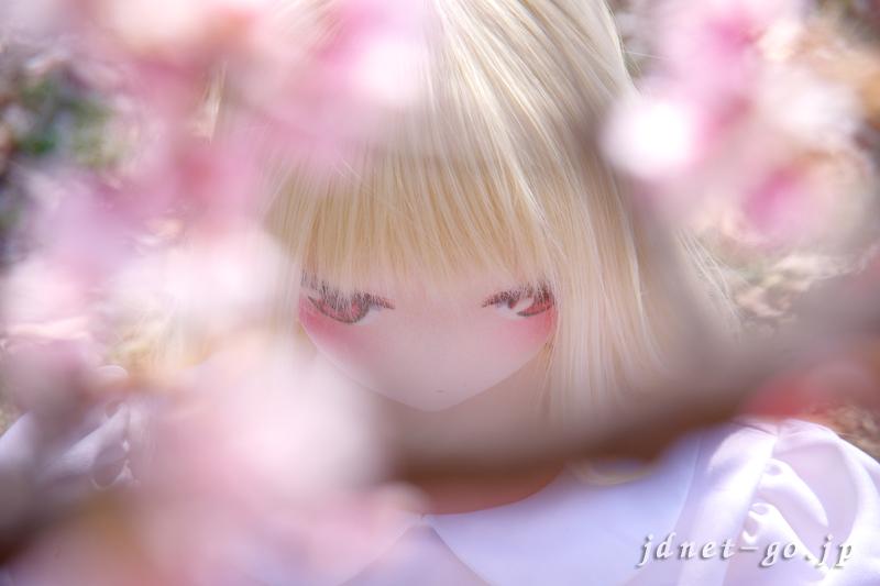 大寒桜を撮る!ふぇありーどーる「おすわり」のの(2)