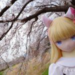 絵理と満開の桜を見に(2)