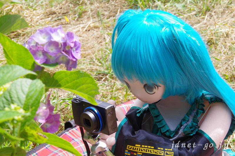 ふぇありーどーる えむと紫陽花撮影(2)
