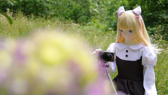 エリーちゃんの初紫陽花(1)