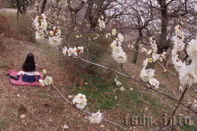 白梅を撮るにこちゃんのカメラ