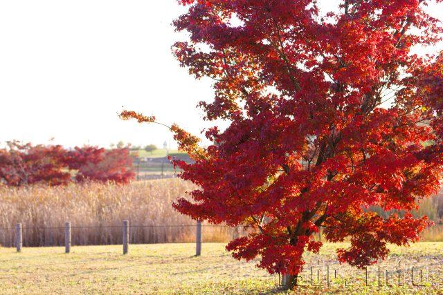 ジト目ちゃんと美しい紅葉を見に